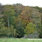 De ruta por la Selva de Irati (ii): desde dentro