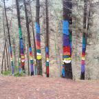 Rutas por País Vasco (iii): Bosque de Oma