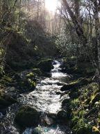 Ruta por el bosque de Muniellos (Asturias)